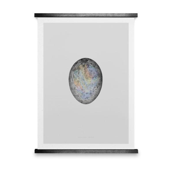 Translucent Egg / Spectrum Skull Art Print