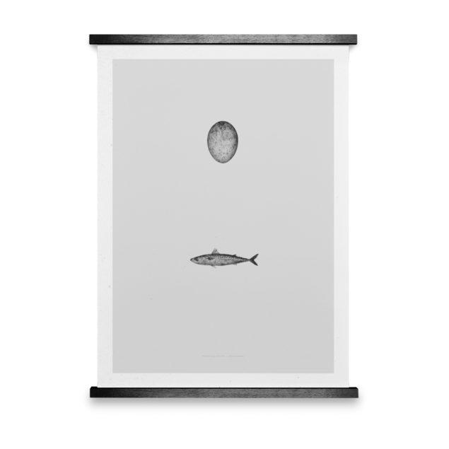 Swedish Mackerel Art Print