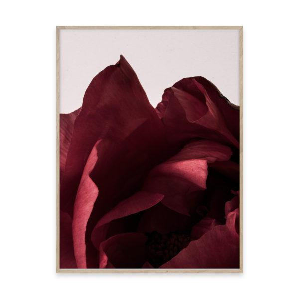 Peonia 02 Photo Art Print