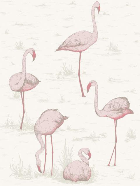 Flamingos Wallpaper