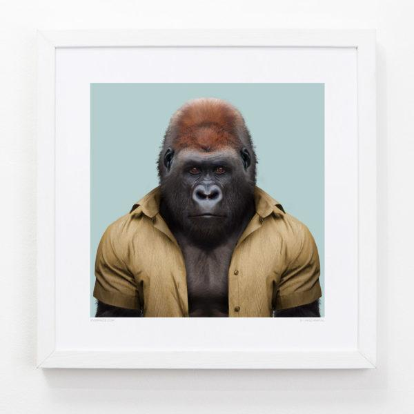 Gorilla Zoo Portrait Art Print