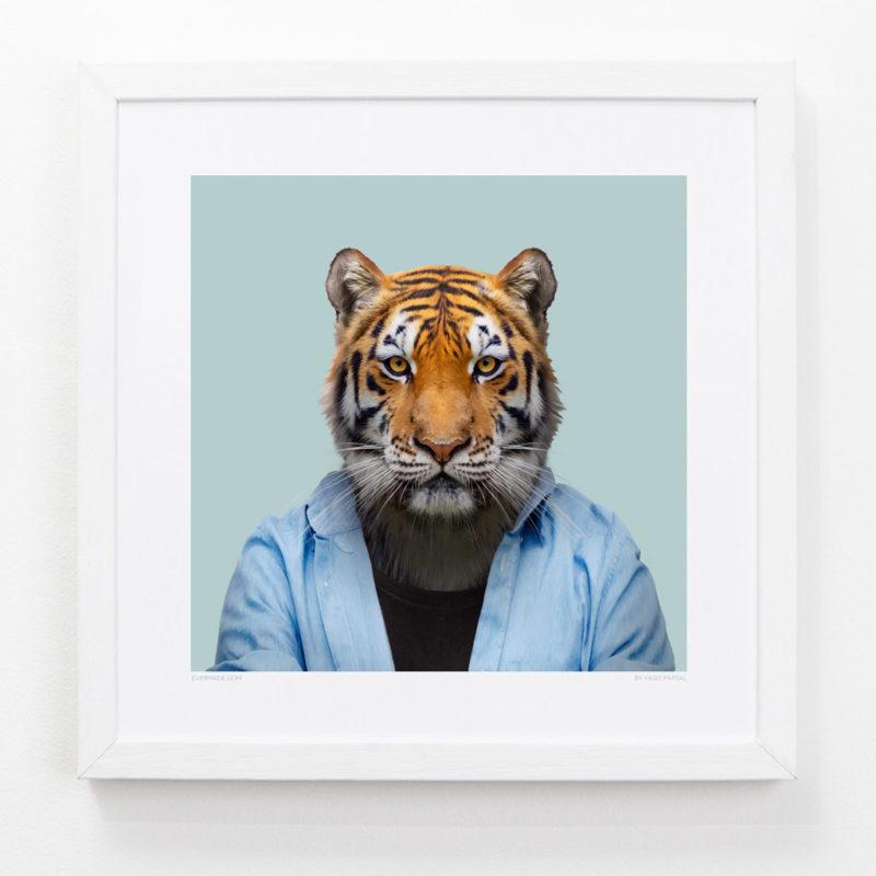 Tiger Zoo Portrait Art Print
