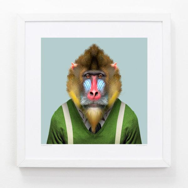 Mandrill Zoo Portrait Art Print