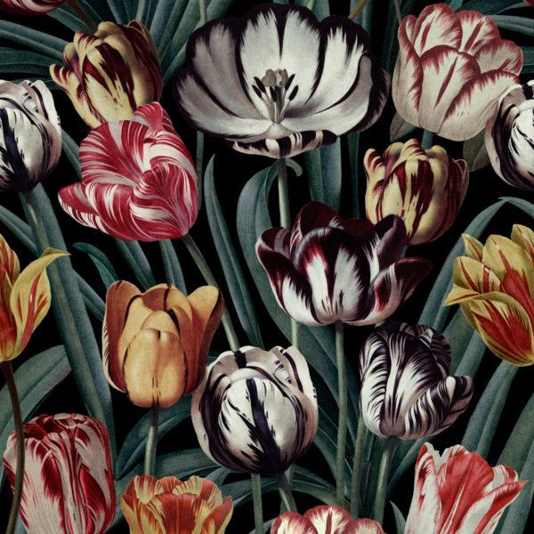 Tulipa Wallpaper