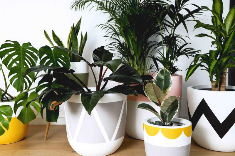 Introducing the Eco Friendly 'Pow Pots'
