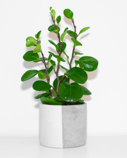 Concrete Half and Half Planter by Pow Pots