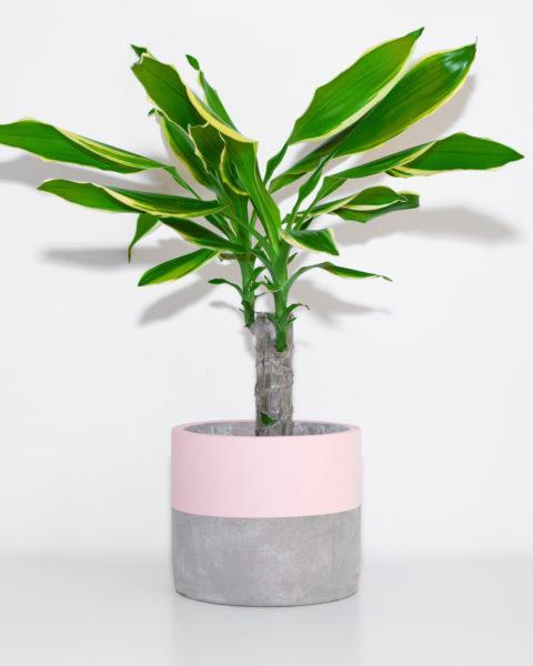 Concrete Lucky Dip Planter by Pow Pots