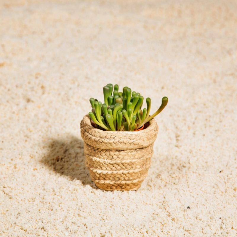 Sierra Cement Basket Mini Planter