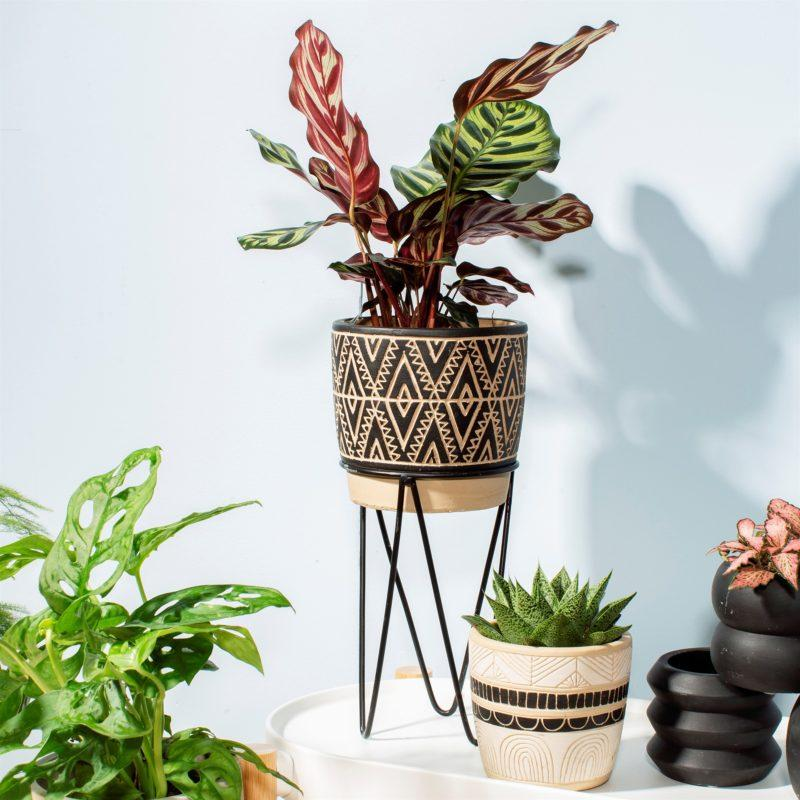 Nomad Planter On Wire Stand