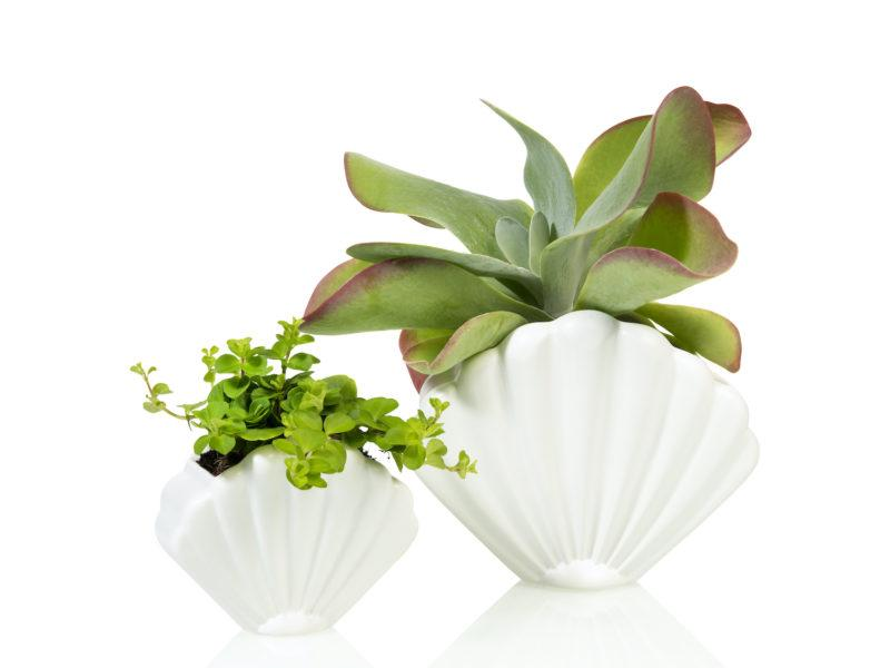 Pink Shell Planter - Small